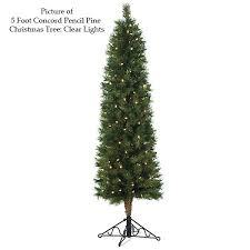 concord pencil pine tree agf3035