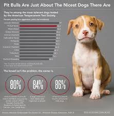 the plight of the pit bull u2013 kate axten u2013 medium