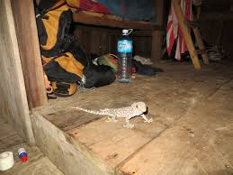 the joys of jungle living part 2 welcome to the jungalow the