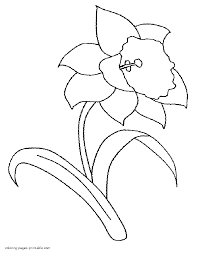 daffodil coloring pages clipart misc pinterest daffodils and