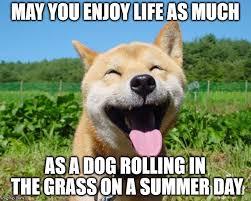 Much Dog Meme - happy dog imgflip