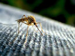 organic ways to get rid of mosquitoes at home and surroundings