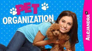 alejandra organization pet organization youtube