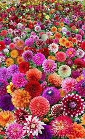 beautiful flowers home