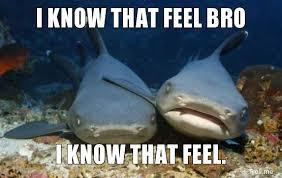 Shark Meme - cute shark meme animals me me me me meme pinterest shark