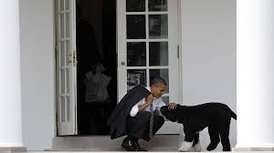 photos the presidents and their pets pets jg tc com