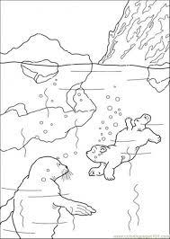 polar bear swimming coloring free polar bear