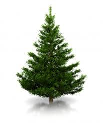 organic christmas tree christmas lights decoration
