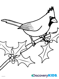 cardinal coloring page discovery kids