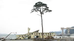 tree of stands as poignant symbol in the two way npr