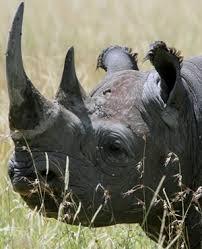 sle resume journalist position in kzn wildlife ezemvelo accommodation cop allegedly linked to rhino poaching killed in kzn shootout news24