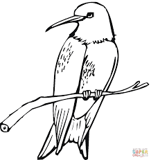 wonderful hummingbird coloring pictures 24 5609