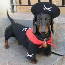 Mini Dachshund Halloween Costumes 187 Doxie Costumes Images Puppies Animals