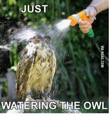 Owl Memes - just watering the owl owl meme on me me