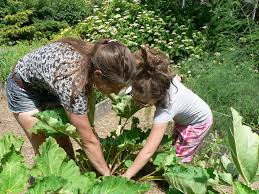 Summer Gardening - what u0027s good to eat portland camp teaches kids all about gardening