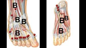 Top Foot Anatomy Pain On The Top Of The Foot And Ankle By Dr Steven J Dolgoff