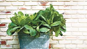 trade kale for collards southern living
