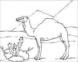 camel coloring picture camel 17942 bestofcoloring com