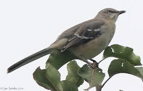Maryland birds images Birds jpg
