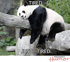 Tired Meme - pregnant panda meme back ground pinterest panda meme and