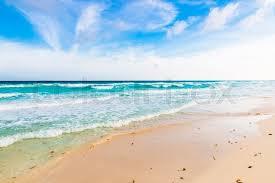 ocean with seaweeds white sand beach caribbean sea cancun