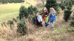 christmas tree farm 2012 youtube