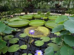 Heat Loving Plants by Things To See Kew Gardens Alex Raphael