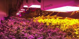 Outdoor Grow Lights 6 Tips To Maximize Your Led Grow Lights Massroots