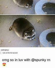 Raccoon Meme - tse3 mm bing net th id oip e8dkep028gyd3vd4ndjdrwh