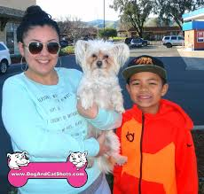 bichon frise qld low cost dog and cat shots in northern california uncategorized