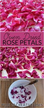 where can i buy petals best 25 petals craft ideas on petals diy