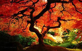 autumn pumpkin wallpaper widescreen fall wallpaper high definition natures wallpapers pinterest