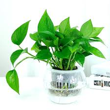 best plant for office amazing office desk plants office plant desk best plants for