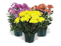 plants u0026 meijer com