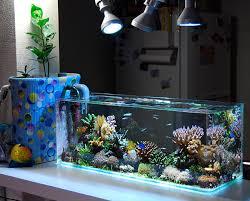 saltwater aquarium fish species for beginners u2013 reef aquascape designs