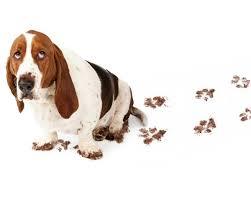 dog and hardwood floors cleaning dog prints from hardwood floors thriftyfun