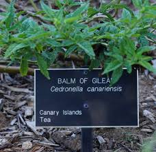 Huntington Botanical Garden by Where Can I Find Bible Plants In Pasadena Garden In Delight