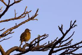 bird in tree photograph by joab souza
