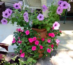 Flower Pot Sale Strawberry Pot Filled With Impatiens And Petunia Flowers Love