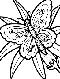 rainforest butterfly coloring pages rainforest butterfly