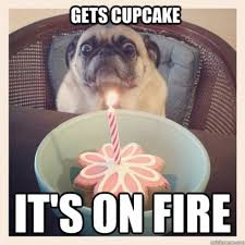 Cupcake Meme - cupcake memes 28 images 25 best memes about cupcake captions