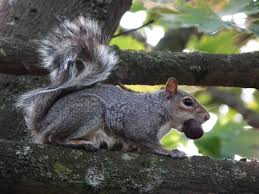 squirrels nuisance or not wildlife in the garden homes for