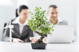 plante verte bureau vie de bureau une plante verte fait toute la différence femina