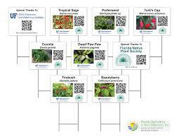 florida native plant society nora kramer graphic u0026 website design portfolio
