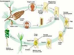 Life Cycle Of A Flowering Plant - sparknotes the life cycle of plants alternation of generations