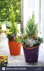 terrace bucket plants paprika plant flowers autumn mauve