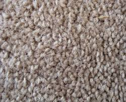 How Do You Get The Urine Smell Out Of Carpet 16 Design Of Getting Urine Out Of Carpet New Csr Home Decoration