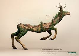 robin wood disappearing animals the inspiration room