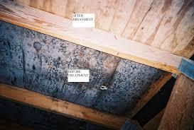 burlington vermont mold remediation whats in your basement