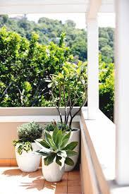 the 25 best balcony plants ideas on pinterest balcony ideas